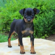 Puppies for Sale from Local Breeders - The Family Puppy